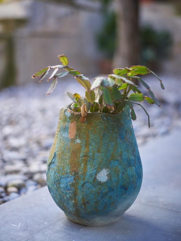 Detalle de planta y tiesto de cerámica en el patio de El Bosque Lácteo, casa rural en Castellet i la Gornal.